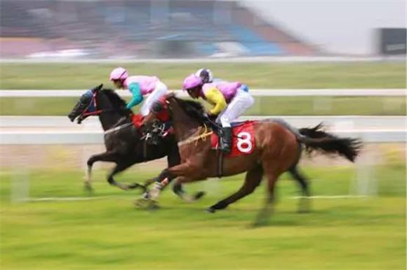 在内蒙古科右中旗的图什业图赛马场,27岁的白丰正策骑着一匹2岁的改良马在场地训练。白丰是科右中旗的蒙古族牧民,这次带着自己的改良马报名参加第四届内蒙古(国际)马术节暨科右中旗一带一路国际骑师邀请赛的比赛。以前我卖一匹蒙古马价格不到3000元,而现在卖改良马价格则超过了1万元,我身边的牧民朋友们热情都很高,已经有50多匹马报名参赛。白丰所说的改良马正是内蒙古莱德马业与当地政府合作实施的精准扶贫项目。  7月6日-9日,第四届内蒙古(国际)马术节暨科右中旗一带一路国际骑师邀请赛在内蒙古科右中
